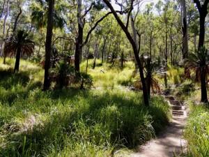 Carnarvon Gorge Trail